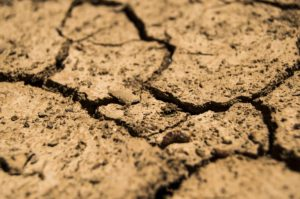 Cracked Soil Due to Drought