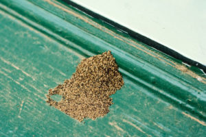 Signs of Termite Damage
